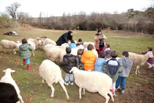 Con las ovejas